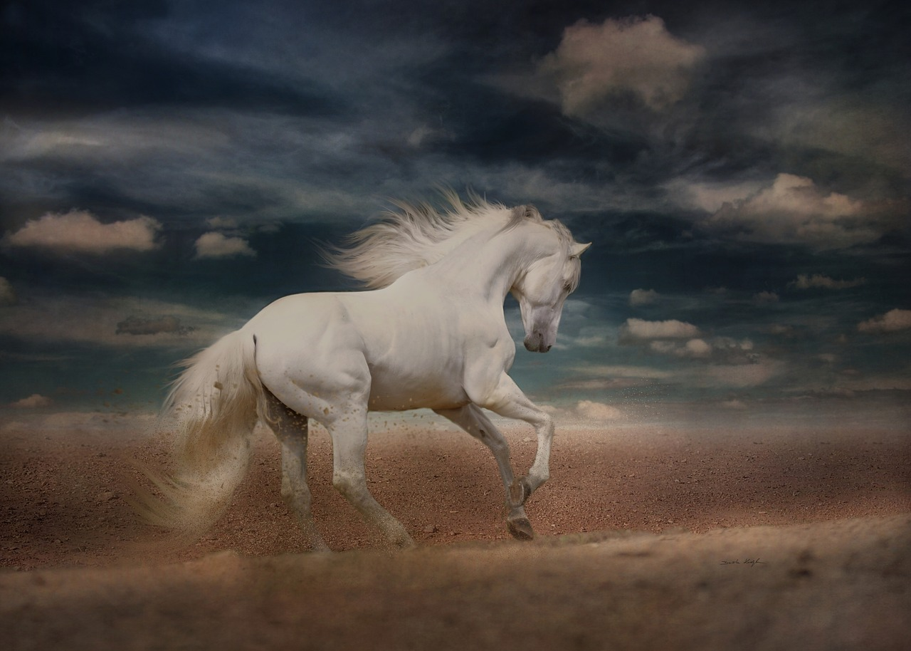 Andalusian Horse: The Spanish Horse