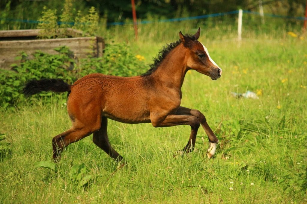 Interesting Details About A Baby Horse