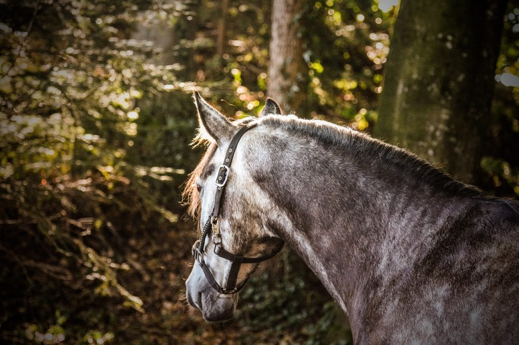 Did You Know About The Morgan Horse?