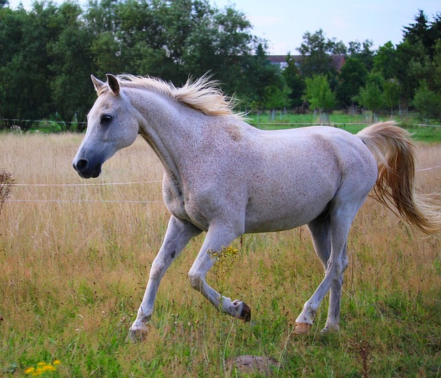 A horse standing on top of a grass covered field